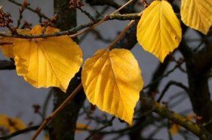Ξερά φύλλα στον κήπο