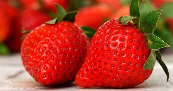 Φράουλα: φύτευση, προστασία, υγεία