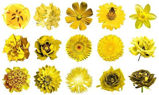 Φυτά με κίτρινα άνθη