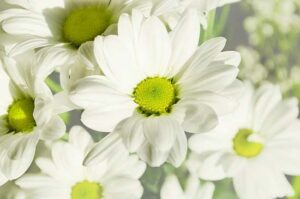 Φυτά με λευκά άνθη
