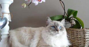 γάτα και ορχιδέα