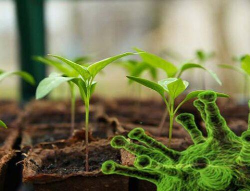Πως μεταδίδονται οι ιοί στα φυτά