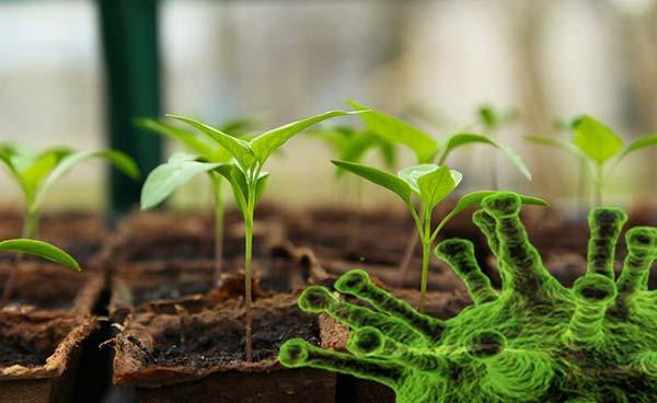 φυτοπαρασιτικοί ιοί