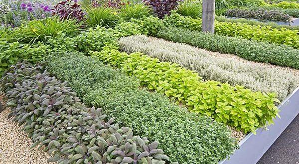 Ιδέες διαμόρφωσης στον σύγχρονο λαχανόκηπο
