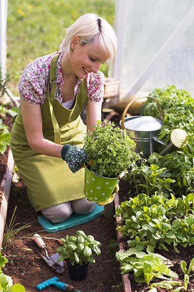 Φύτευση αρωματικών στον κήπο
