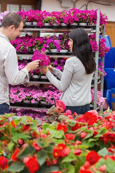Αγορά φυτών από φυτώριο
