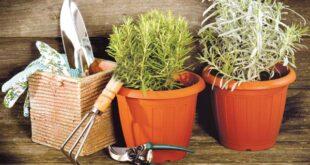 Από τη γλάστρα στο πιάτο μας: αρωματικά φυτά στη μαγειρική