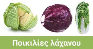 λάχανο ποικιλίες για καλλιέργεια