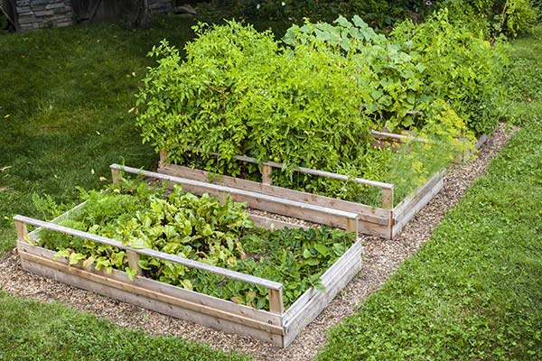 λαχανικά σε πλαίσια