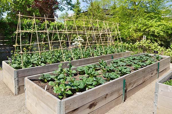 Φύτευση λαχανικών σε πλαίσια