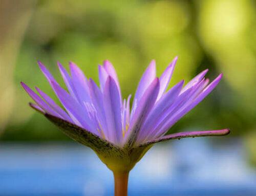Τα φυτά στην ποίηση του Γιάννη Ρίτσου (Μέρος Α)