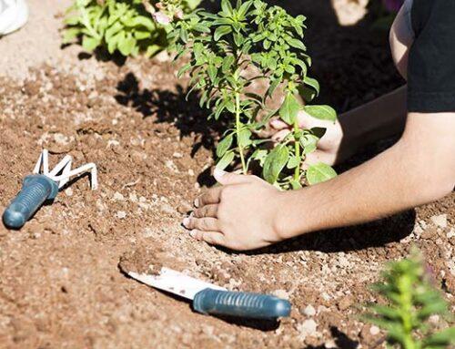 Σχολικός κήπος: τι είναι και ποια τα πλεονεκτήματα