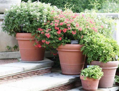 Πήλινες γλάστρες στον κήπο για όλα τα γούστα